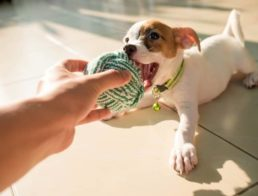 The Best Cheap Dog Toys