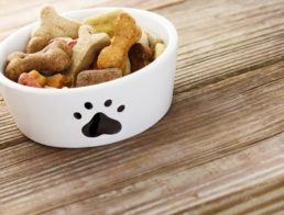 The Best Dog Bowls