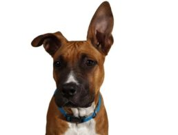 The Best Dog Calming Collars