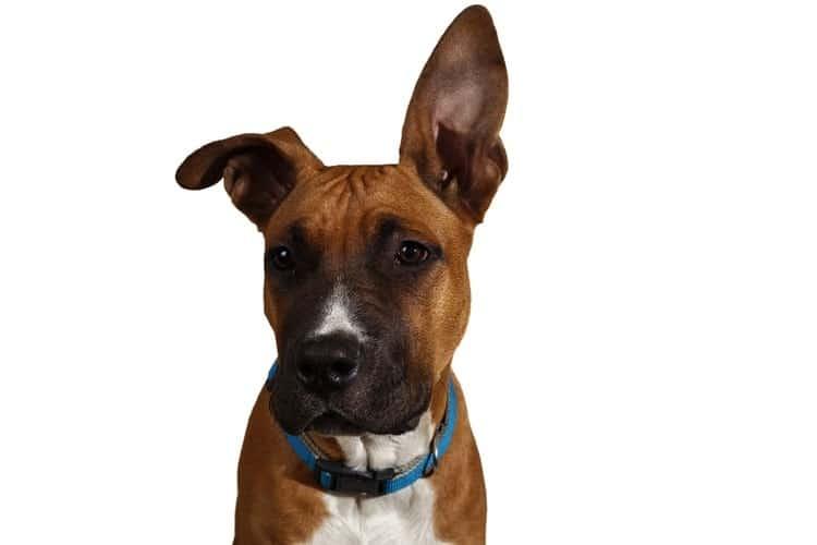 Los mejores collares calmantes para perros