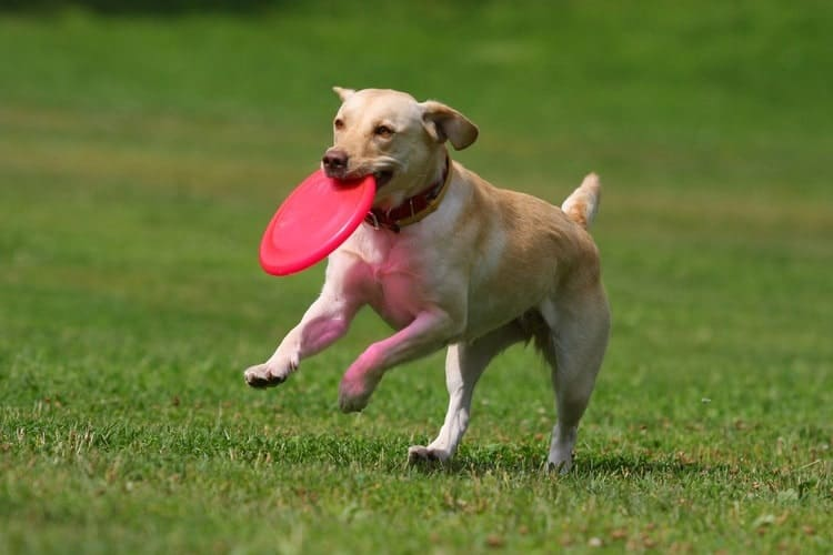 The 25 Best Dog Frisbees And Disc Toys