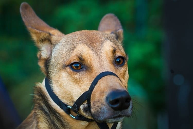 The Best Dog Muzzles