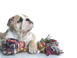 The Best Dog Rope Toys