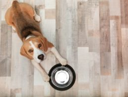 The Farmer's Dog Review: Are There Better Fresh Dog Food Options?