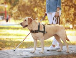The Best Service Dog Vests & Harnesses
