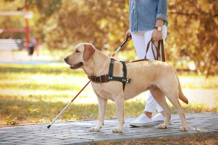 The 25 Best Service Dog Vests Harnesses Of 2020 Pet Life Today