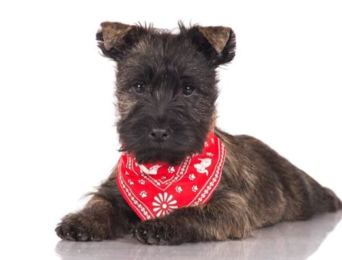 The Best Dog Bandanas