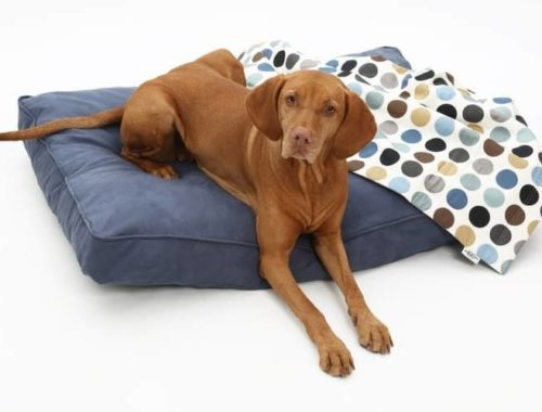 The 25 Best Heated Dog Beds Of 2020 Pet Life Today