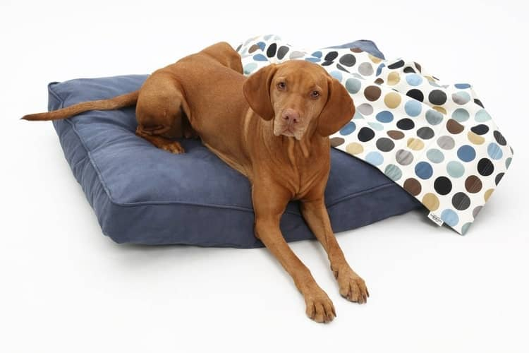 The Best Dog Bed Covers