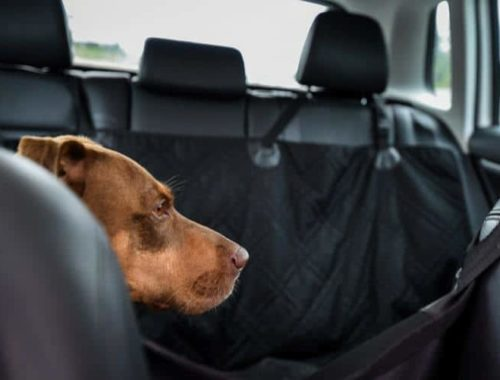 The Best Dog Car Seat Covers