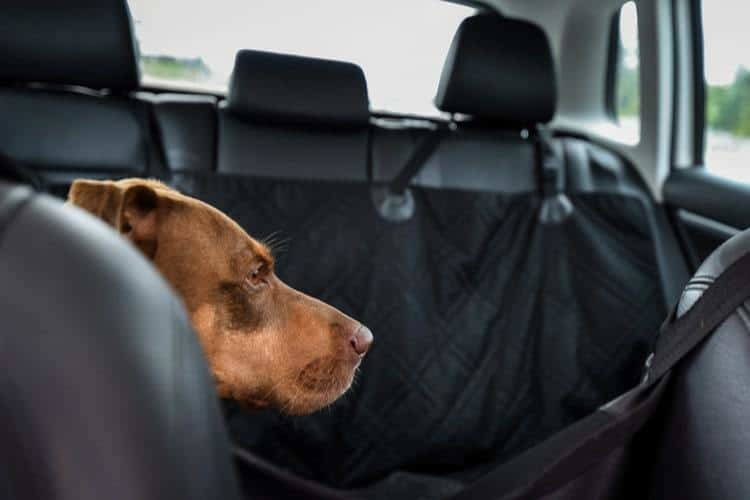 Pleasing The 25 Best Dog Car Seat Covers Of 2019 Pet Life Today Squirreltailoven Fun Painted Chair Ideas Images Squirreltailovenorg