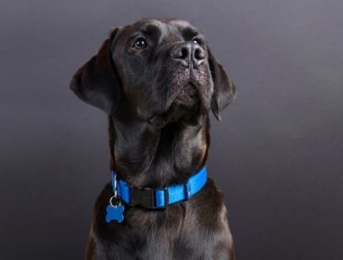 The Best Dog Collars
