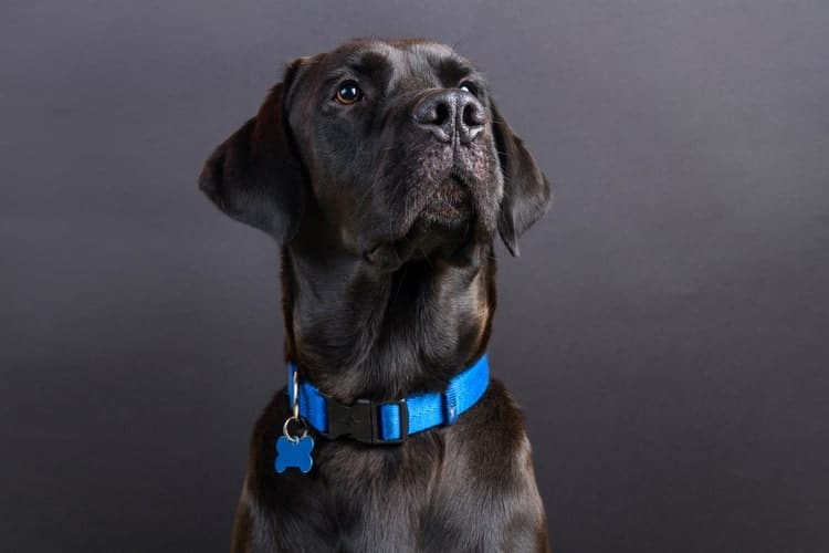 The 25 Best Dog Collars of 2019 - Pet Life Today