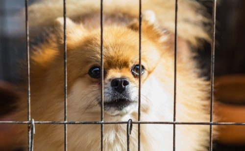 Invest in a sturdy dog crate