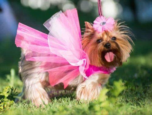 The Best Dog Dresses