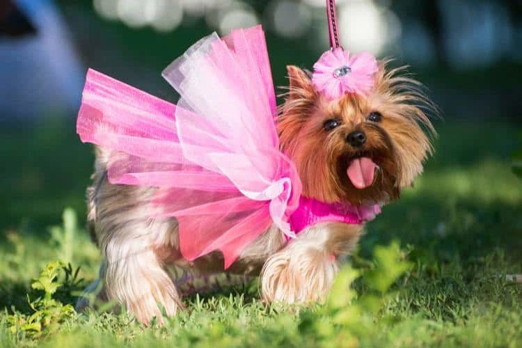 The Best Dog Dresses