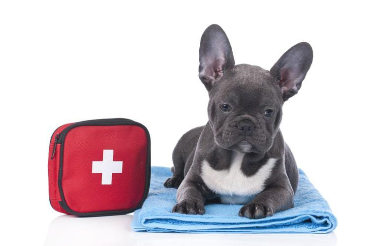 The Best Dog First Aid Kits