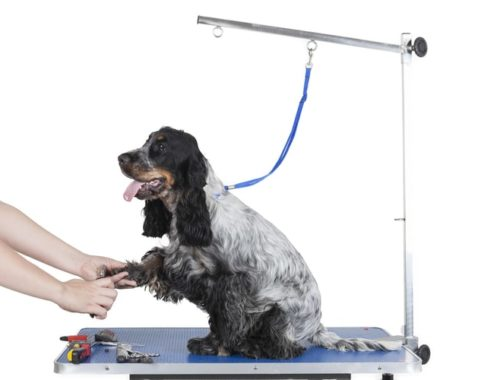 The Best Dog Grooming Tables