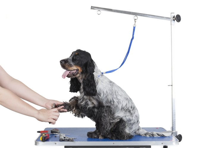 Affordable Dog Grooming Table Arm The Best Dog Grooming Tables