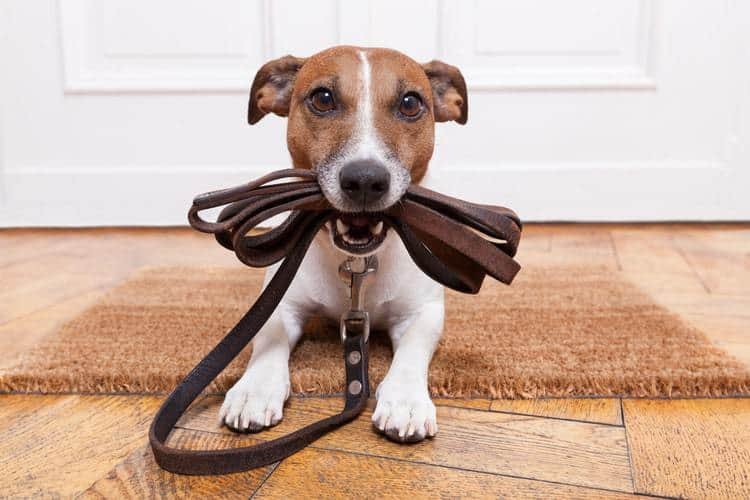 The Best Dog Leashes