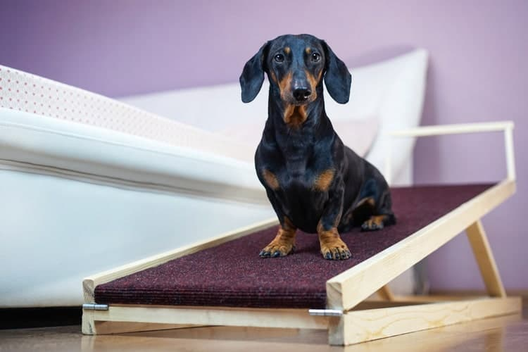 The Best Dog Ramps