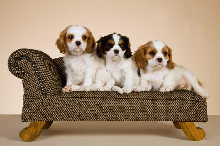 The Best Dog Sofas