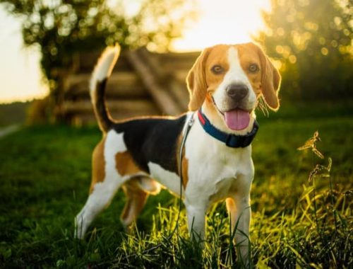 The Best LED Dog Collars