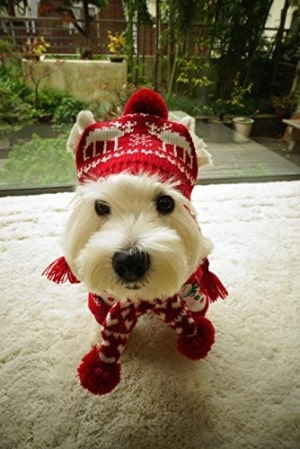 Alemon Pet Xmas Costume Scarf and Hat Set
