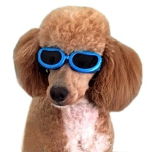 Alfie Pet Larry Sun Glasses for Dogs and Cats