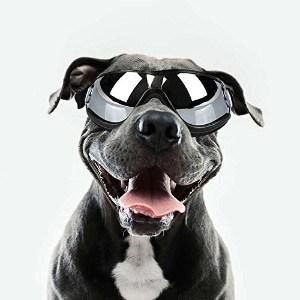DETI Dog Sunglasses