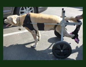 Huggiecart Large Dog Wheelchair