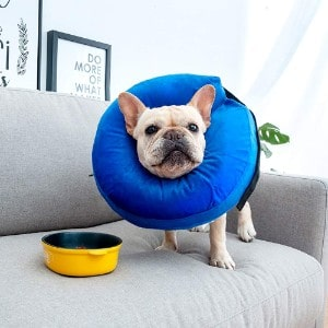 MorTime Protective Inflatable Collar for Dogs