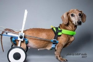 Newlife Mobility Adjustable Dog Wheelchair for Short Dogs