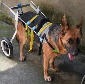 Newlife Mobility Large Dog Wheelchair