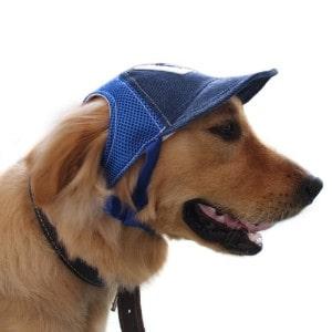 Petall Dog Baseball Cap