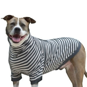 Tooth & Honey Big Dog Stripe Shirt