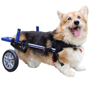 Walkin' Wheels Corgi Wheelchair
