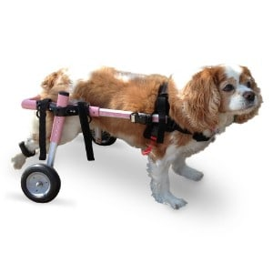 Walkin' Wheels Small Dog Wheelchair