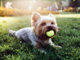 The Best Dog Balls