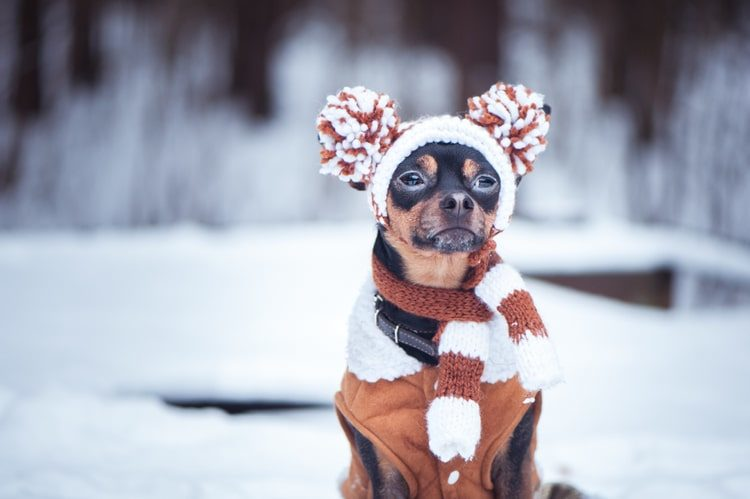The Best Dog Hats