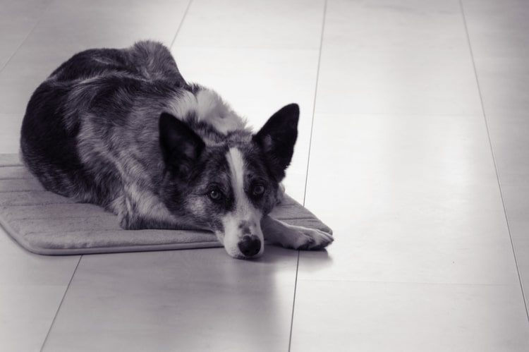 The Best Dog Heating Pads