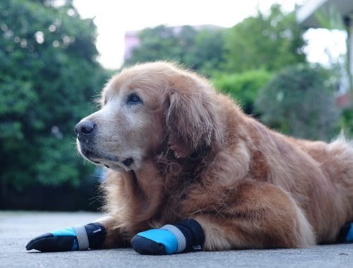 The Best Dog Paw Protectors