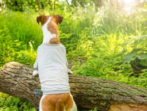 The Best Dog Shirts