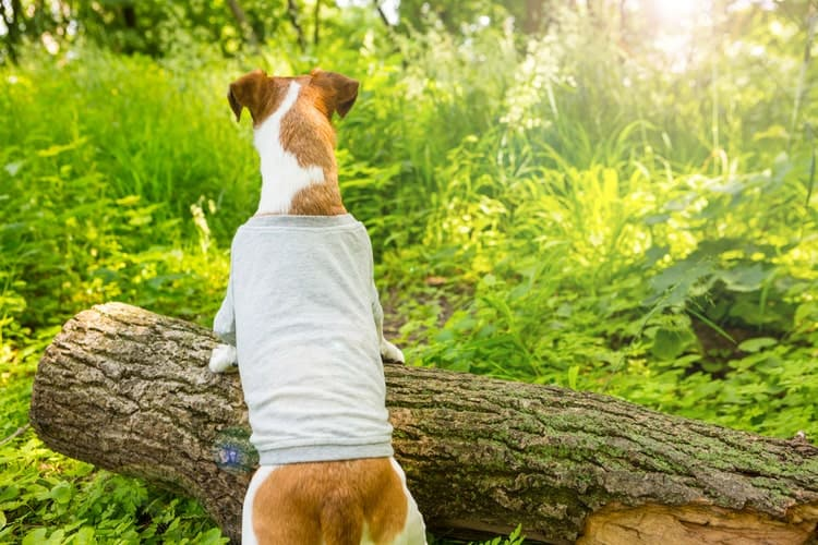 a965363ea481d The 25 Best Dog Shirts of 2019 - Pet Life Today