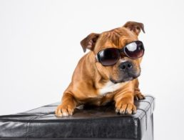 The Best Dog Sunglasses
