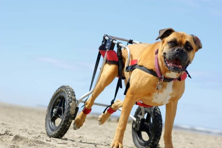 The 25 Best Dog Wheelchairs of 2020 ...