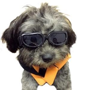 Kailian Dog Goggles