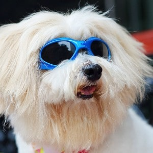 LOOYUAN Pet Dog Sunglasses