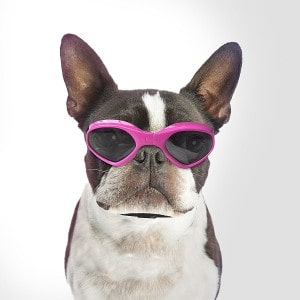 Namsan Stylish And Fun Pet Goggles