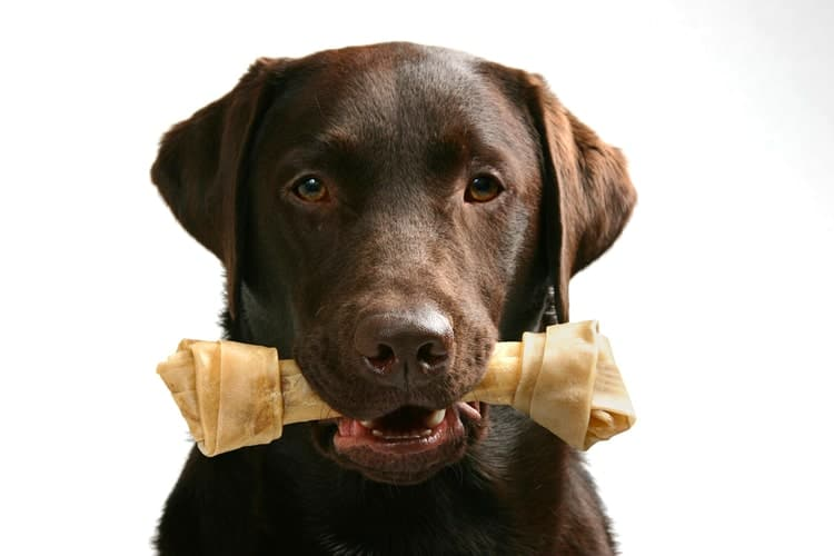The Best Rawhide for Dogs